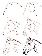 Dessiner un cheval comment faire - Comment dessiner un cheval au galop ...