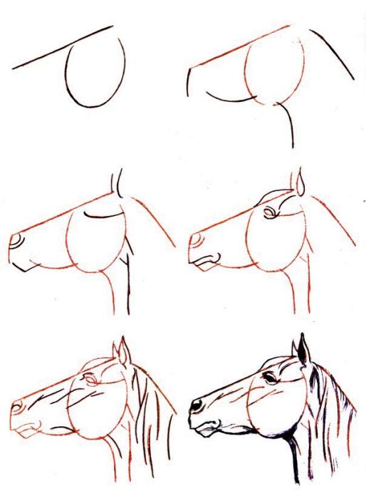 Dessiner un cheval une tete de cheval levee for Peindre facilement